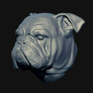 3D English Bulldog head