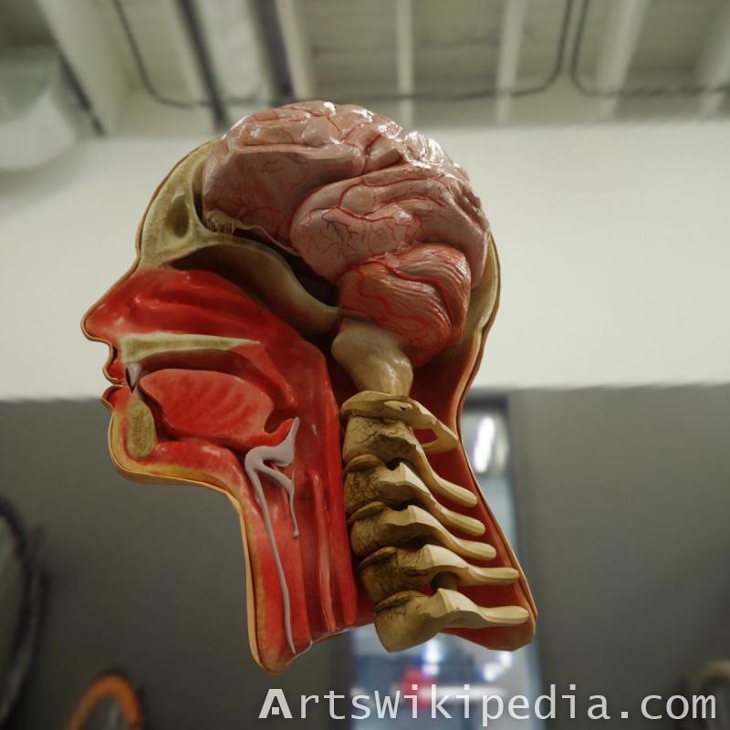 3d sagittal section of head