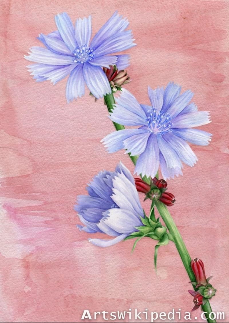 Blue Chicory Card