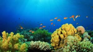 8k-underwater-fish-image