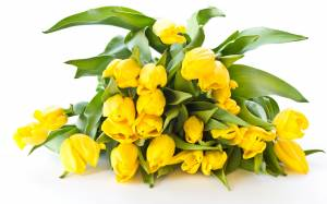 yellow-tulips-bouquet