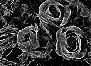 black and white abstract rose