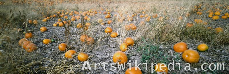 Free Pumpkin field image