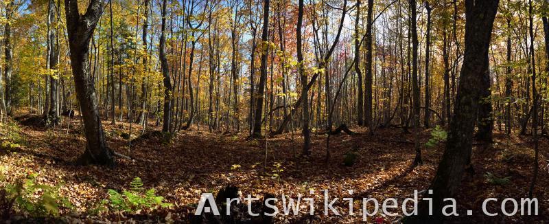 Fall season field image