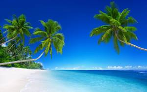 beach-palm-image
