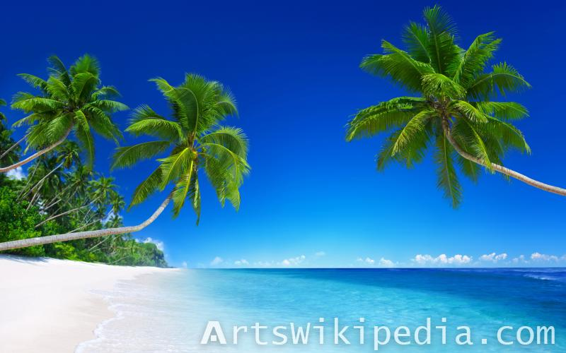 Beach Palm image