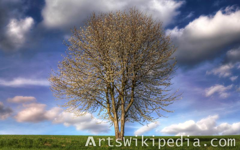 Amazing natural tree image