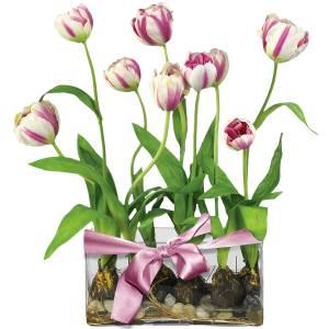 flower-gift-clipart-58f6e61301ed4