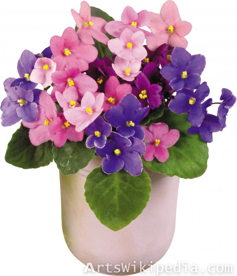 Potted flowers clipart