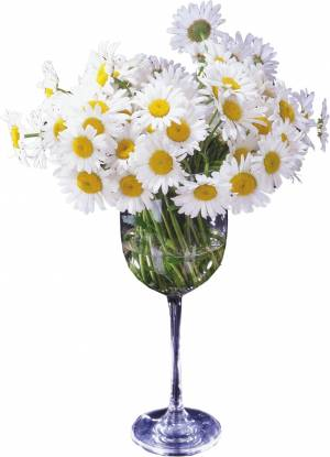 Narcissus in glass vase