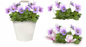 purple-pansy-flower-58f6e5f80c499