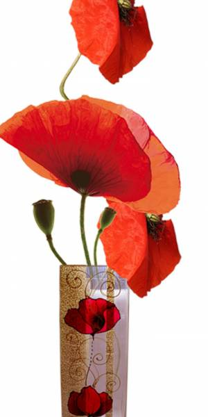 red coquelicot clipart