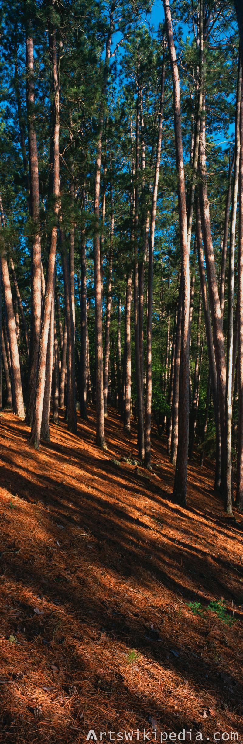 long tree wood