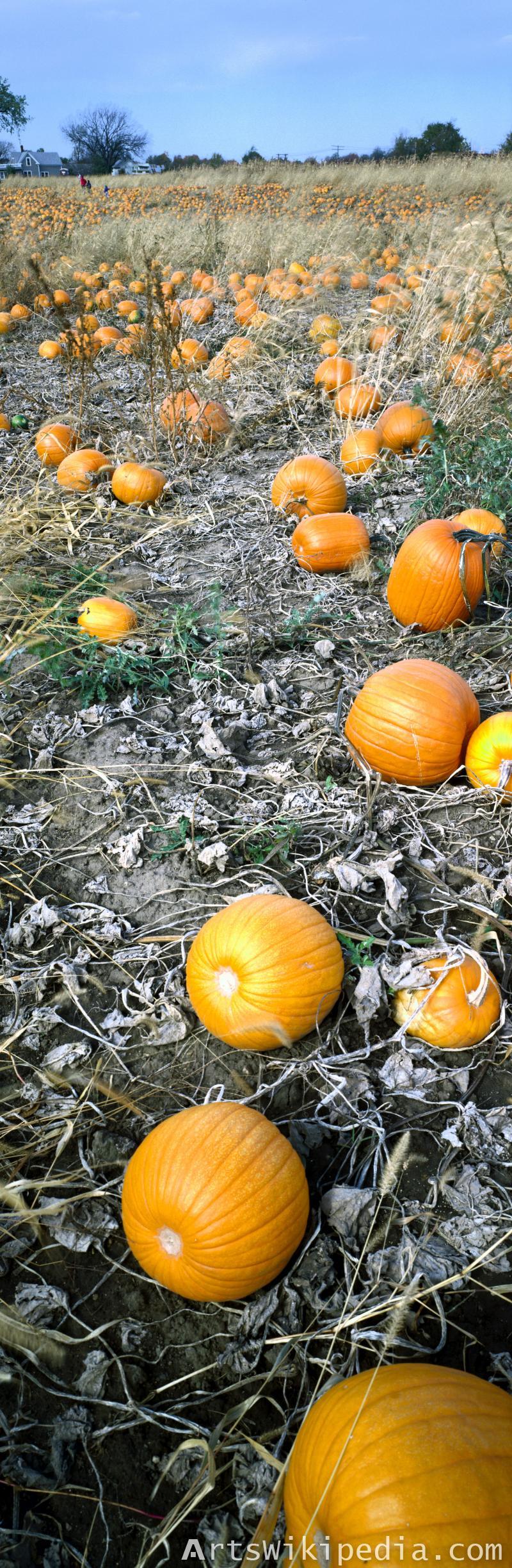 Free Pumpkin image