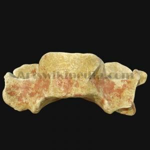 c3-vertebrae-anterior