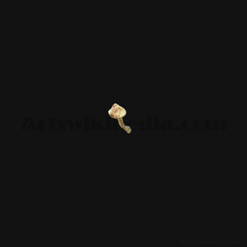 3D Fibula Bone