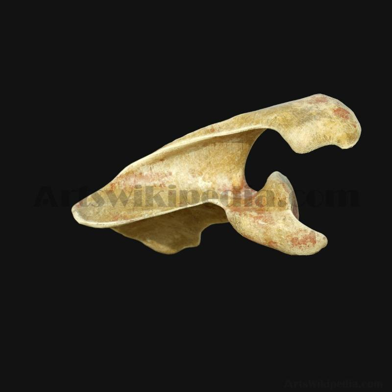 3D Scapula Anatomy