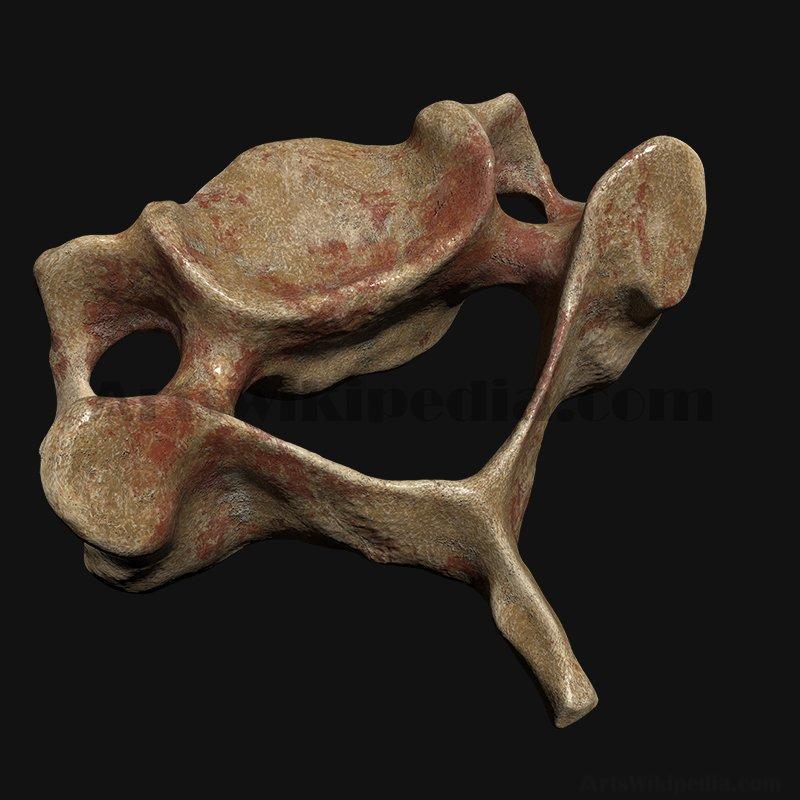 C3 Cervical  Vertebrae