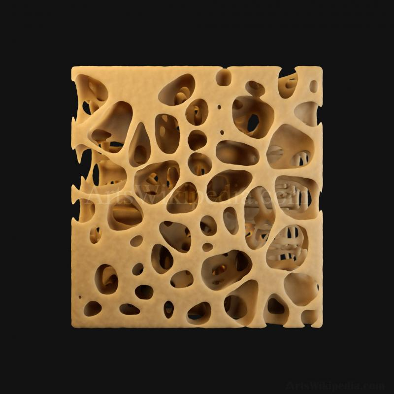 3D Normal Histology of Spongy Bone Structure