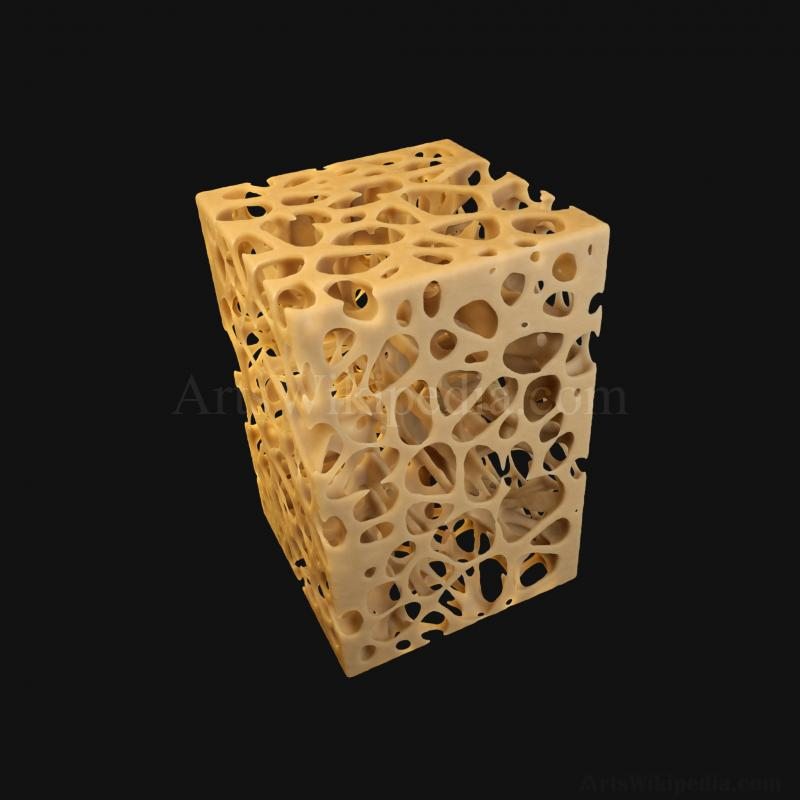 3D Trabeculae of Spongy Bone Normal Histology