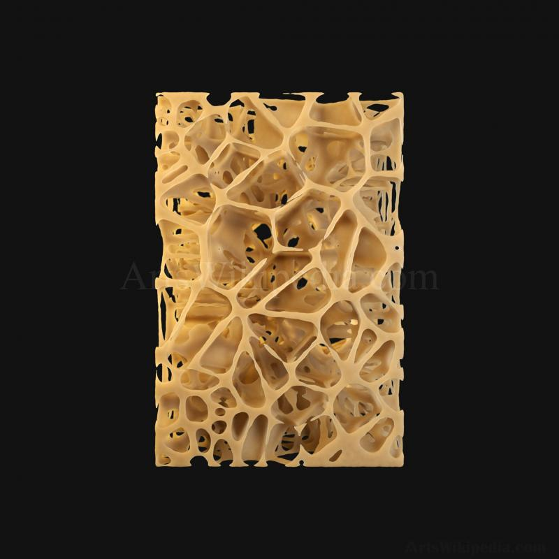 3D Trabeculae of Spongy Bone Osteopenia Histology