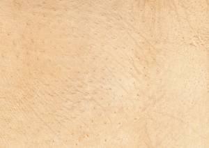 animal-skin-texture-image