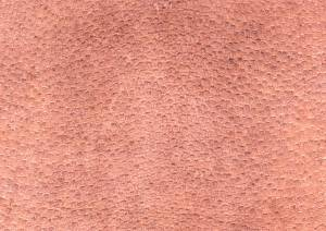 rough animal skin texture