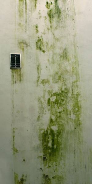green-dirty-wall-texture