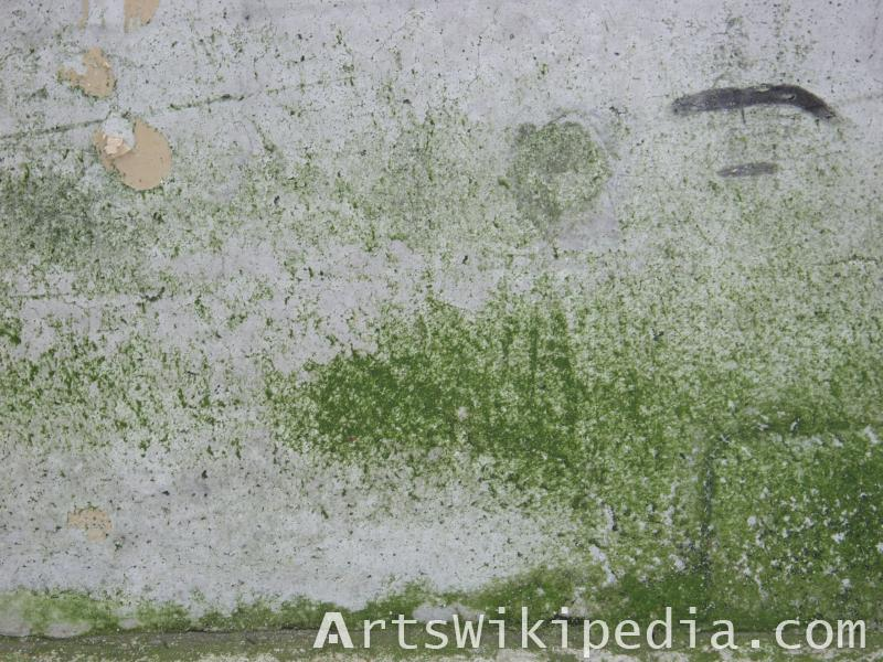 wall moss texture