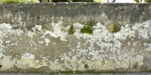 moss dirt wall texture