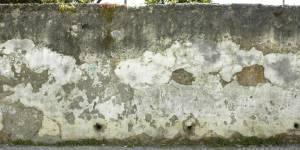 moss rotten wall