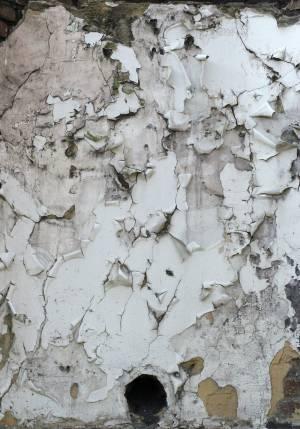 white pealed plaster