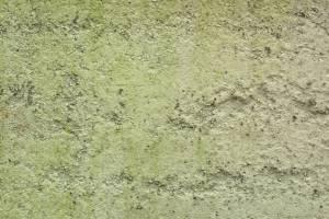 greenish wall stucco texture