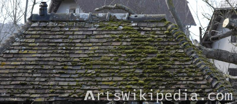 old shingles roof texture