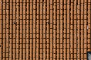 free-roof-bitmap-texture