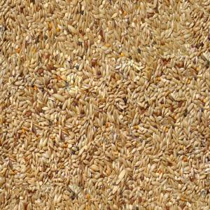 Seamless Wheat Texture