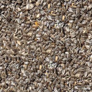 seamless-sunflower-seeds-texture