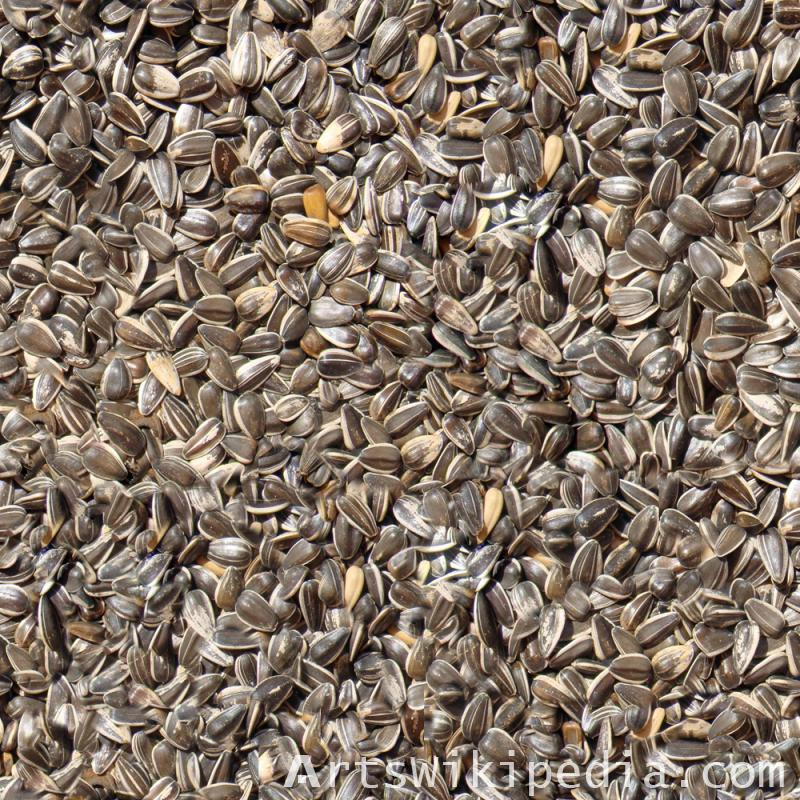 seamless sunflower seeds texture