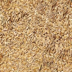 seamless-barley-texture