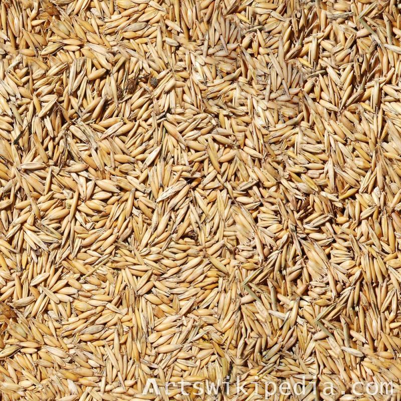 seamless Barley texture