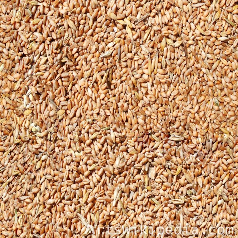 Seamless wheat grain texture
