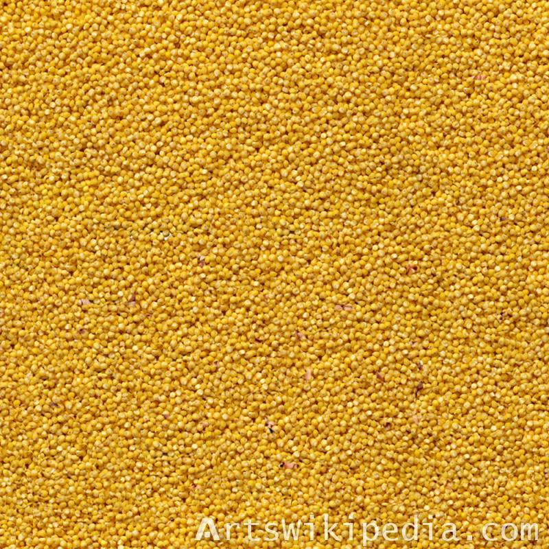 Seamless yellow corn Texture