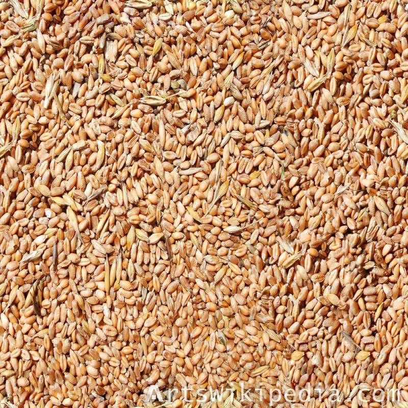 Free Seamless Wheat Texture