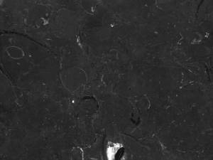 black-marble-rock-texture-for-free